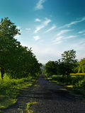 Cherry alley. Nature background theme stock photography