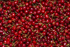 Cherry as texture Stock Photography