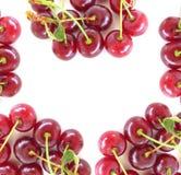 Cherry Background Stock Image