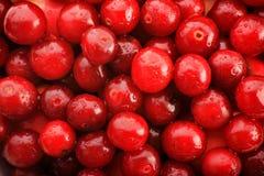 Cherry background Royalty Free Stock Image