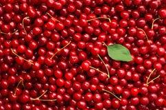 Cherry background Royalty Free Stock Photos
