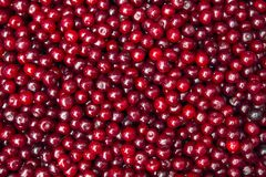 Cherry background Stock Photography