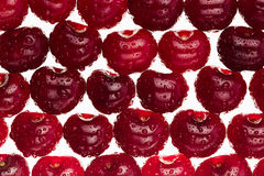 Cherry background. Ripe fresh  glossy rich cherries on white background. Royalty Free Stock Image