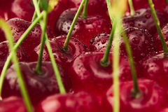 Cherry background. Ripe fresh rich cherries with  tails and drops of water. Royalty Free Stock Photography