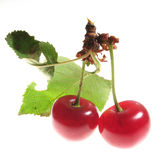 Cherry, backlite Stock Photography