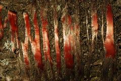 Cherry bark Stock Image
