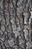 Cherry Bark negro Imagen de archivo libre de regalías