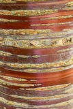 Cherry Bark. Ornamental Cherry Bark - Prunus serrula Royalty Free Stock Images