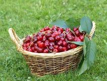 Cherry basket Royalty Free Stock Photography