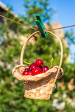Cherry in a basket is hanging on clothespin Royalty Free Stock Image