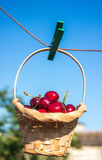 Cherry is in a basket is hanging on clothespin Stock Image