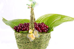 Cherry basket Royalty Free Stock Images