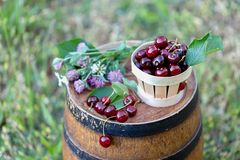 Cherry in a basket and wild flowers on a wooden wine barrel in a garden in the summer. Copy space. Soft focus. stock photography