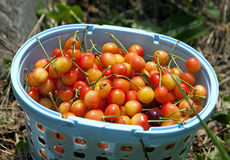 Cherry Baskets Royalty Free Stock Photography