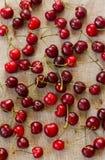 Cherry Berries Imágenes de archivo libres de regalías