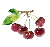 Cherry berries on white background Royalty Free Stock Photos