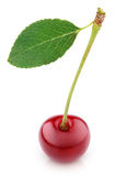 Cherry berry with leaf isolated on white Stock Photography