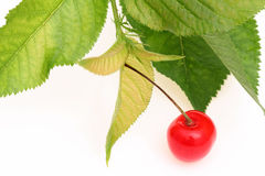 Cherry berry. Red cherry berry with leaves on white background Royalty Free Stock Photography