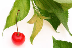 Cherry berry. Red cherry berry with leaves on white background Royalty Free Stock Photo