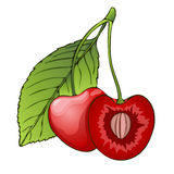 Cherry, berry in the section with a bone. Painted graphic , cartoon. Vector illustration. Cherry, berry in the section with a bone. Painted graphic berry vector illustration
