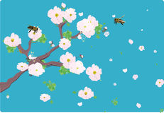Cherry bloom on a branch with bees and flowers fly royalty free stock images