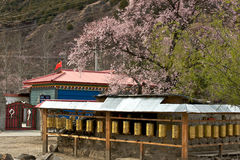 Cherry Blooming,Nyingchi,Tibet Stock Photography