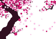 Cherry blossom. Old cherry tree in bloom. Created in Illustrator Stock Photo