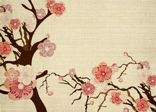 Cherry blossom. Illustration of cherry blossom flowers on paper Stock Images