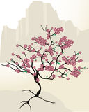 Cherry blossom. Dreaming in a mountain with a cherry blossom tree Royalty Free Stock Photo