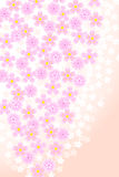 Cherry Blossom. Pink and White Cherry Blossoms Stock Image