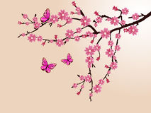 Cherry blossom. Illustration of a branch with cherry blossom Royalty Free Stock Images