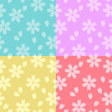 Cherry blossom. Seamless backgrounds with cherry blossom prints Royalty Free Stock Image