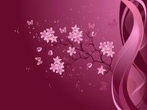 Cherry blossom Stock Image