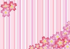Cherry Blossom. Illustration of Sakura Cherry Blossom Background Stock Photo