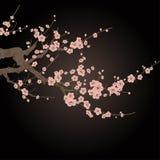 Cherry blossom. Vector branch of cherry blossom over black Stock Photos