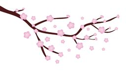 Cherry blossom. Illustration of a Cherry blossom in spring time vector illustration