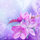 Cherry blossom. And shine stars royalty free illustration