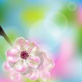 Cherry Blossom Stock de ilustración