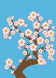 Cherry blossom. Vector illustration of cherry blossom (sakura) on blue background vector illustration
