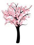 Cherry Blossom Image libre de droits