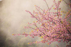 Free Cherry Blossom Stock Photo - 48966850