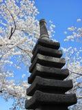Cherry Blossom 078 Fotografie Stock