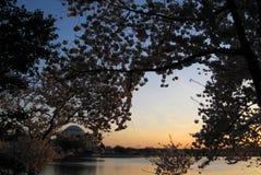 Cherry Blossom 122 Immagini Stock