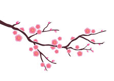 Cherry blossom. Ector illustration of cherry blossom painting Royalty Free Stock Image