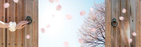 Cherry Blossom Fotos de Stock Royalty Free