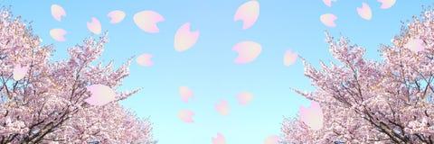 Cherry Blossom lizenzfreies stockfoto