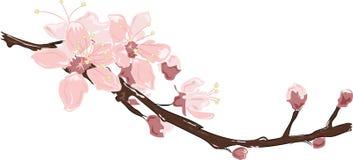 Cherry Blossom royalty illustrazione gratis