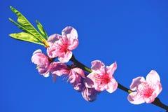 Cherry Blossom Against Blue Sky rose Photographie stock libre de droits
