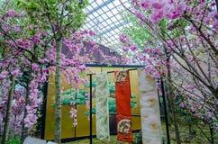 Cherry Blossom al giardino dalla baia Immagine Stock Libera da Diritti