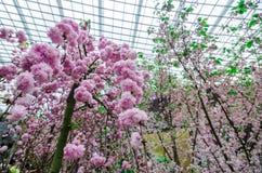 Cherry Blossom al giardino dalla baia Fotografia Stock